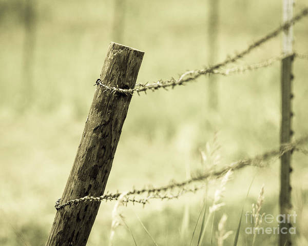 Photograph - Fence Post And Barbed Wire by Pam  Holdsworth