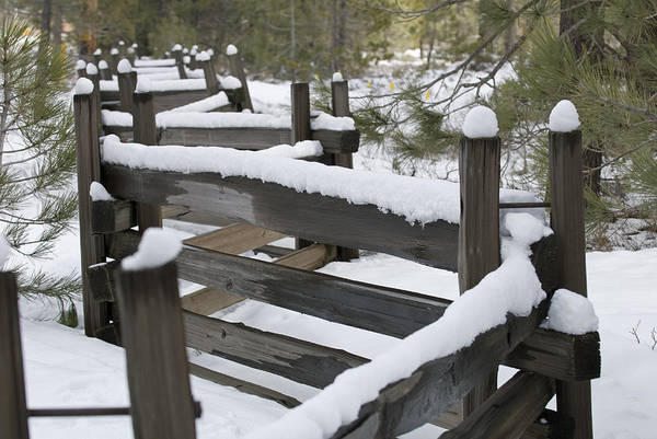Donner Photograph - Fence Post At Donner Lake Area Covered by Rich Reid