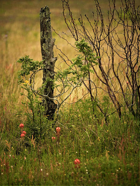 Photograph - Fence Post by Charles McKelroy
