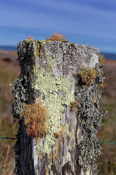 Wall Art - Photograph - Fence Post Encrusted With Lichen  by Kathleen Bishop