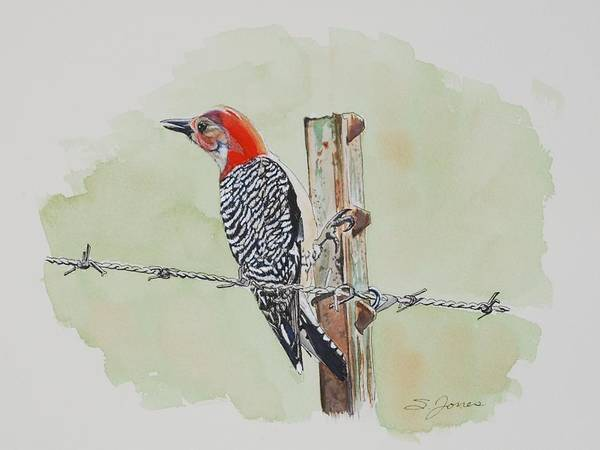 Fence Sitting Art Print