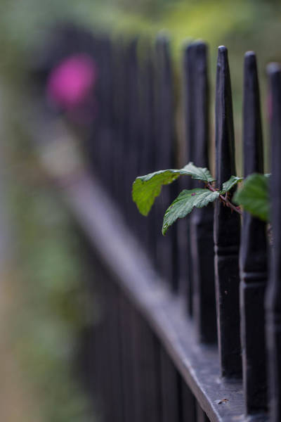 Photograph - Fence Vertical by Clare Bambers