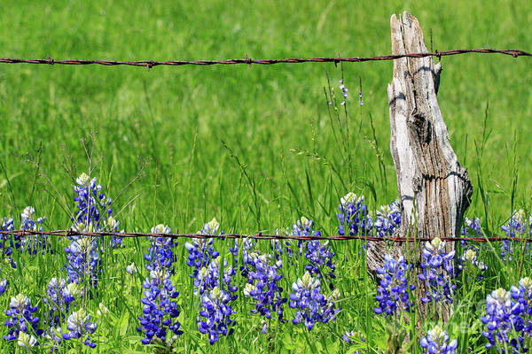 Photograph - Fenced In by Jerry Bunger