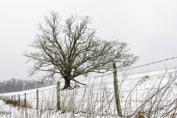 Photograph - Fenced In Oak Tree  by Ken Barrett