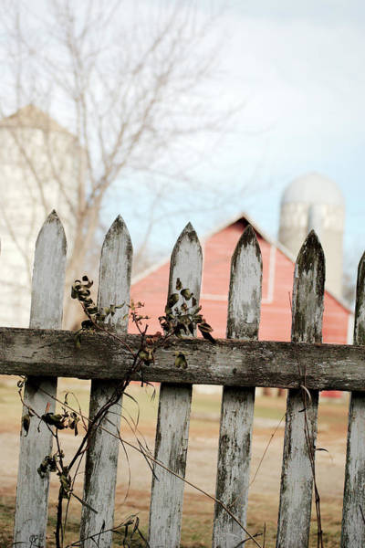 Photograph - Fenceline by Troy Stapek