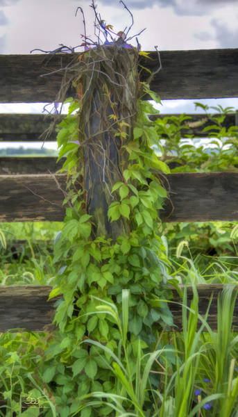 Photograph - Fencepost And Vines by Sam Davis Johnson