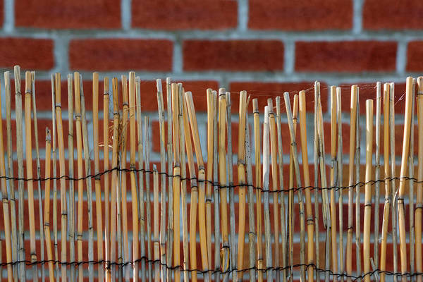 Photograph - Fencing In The Wall by Cate Franklyn