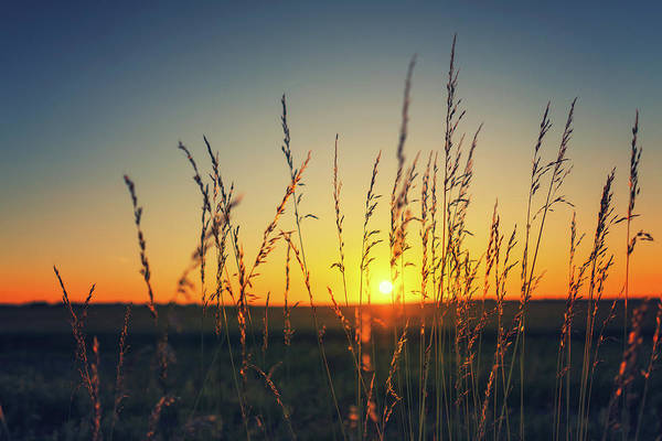 Photograph - Fenland Sunset by James Billings