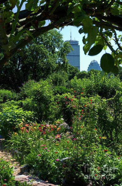 Photograph - Fenway Victory Gardens, Boston, Massachusetts #30951-52 by John Bald