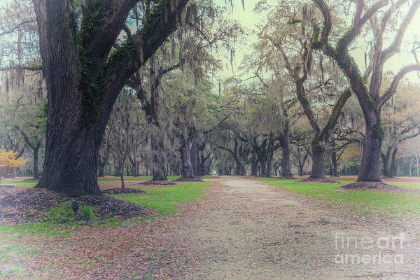 Photograph - Fenwick Hall Plantation - Allee Of Oaks by Dale Powell