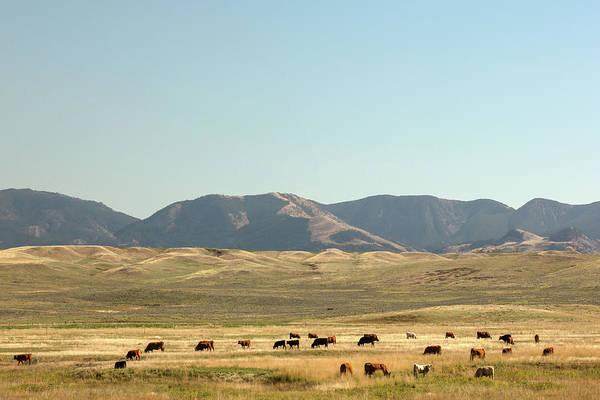 Photograph - Fergus Herd by Todd Klassy