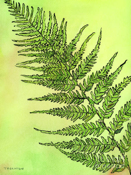 Painting - Fern 2 by Diane Thornton
