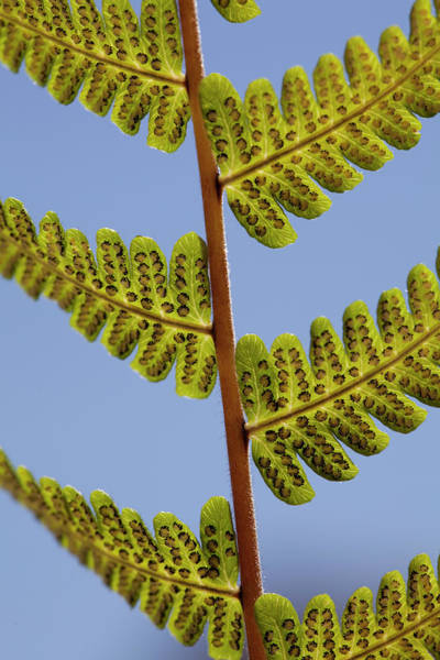 Coppice Photograph - Fern by Al Hurley