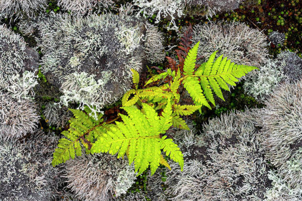 Photograph - Fern And Lichen by Christopher Johnson