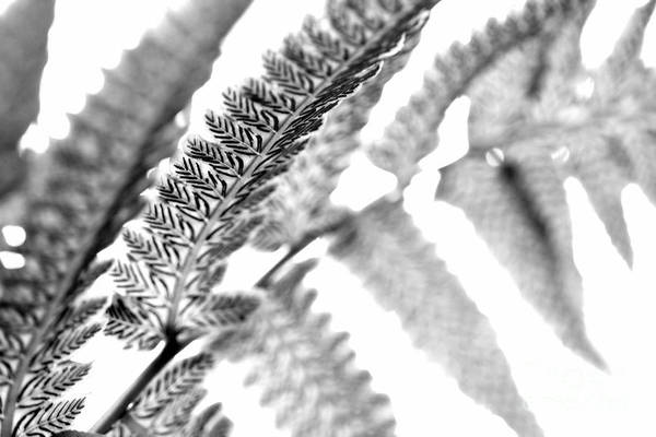 Photograph - Fern Crush In Black And White by Angela Rath