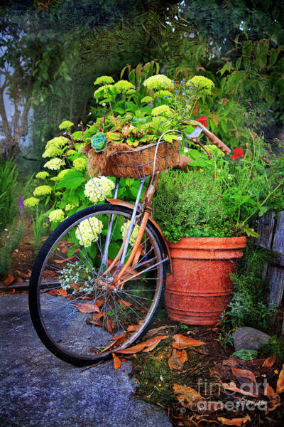 Photograph - Fern Dale Flower Bicycle by Craig J Satterlee