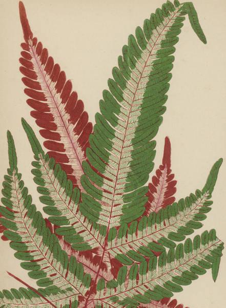 Leaf Venation Wall Art - Painting - Fern by English School