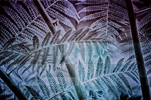Digital Art - Fern Forest by Mimulux patricia No