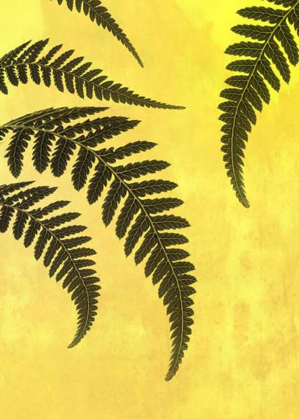 Wall Art - Photograph - Fern Leaves by Mark Rogan