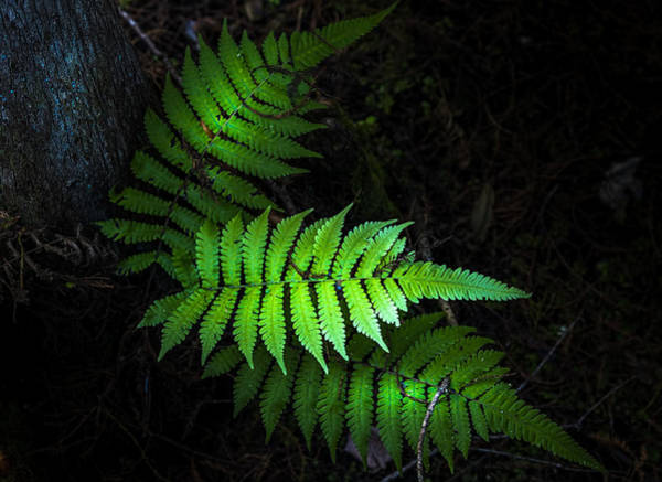 Wall Art - Photograph - Fern Life by Marvin Spates