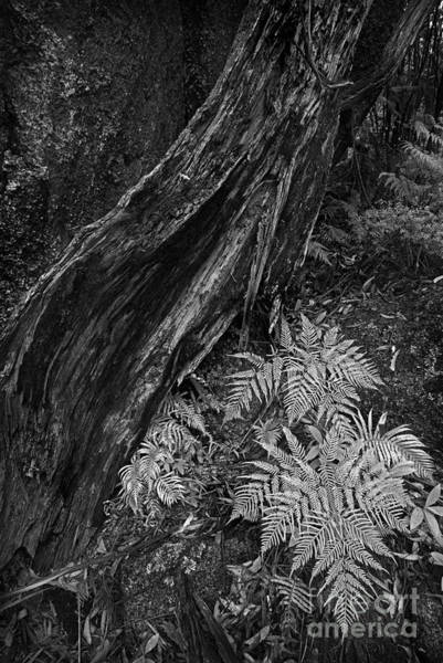 Photograph - Fern by Russell Brown