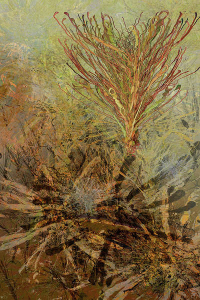 Mixed Media - Fern Series #29 by Kristin Doner