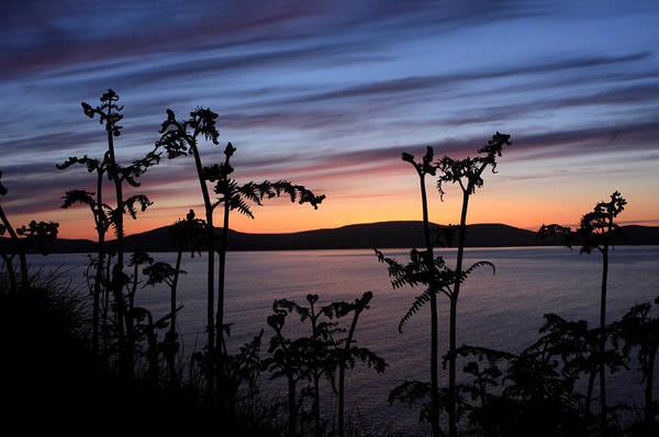 Photograph - Fern Sunset by Aidan Moran