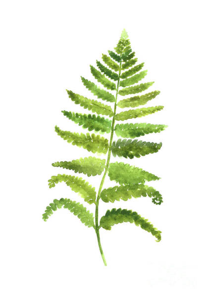 Wall Hanging Wall Art - Painting - Fern Wall Poster, Green Kitchen Decor, Botanical Floral Painting by Joanna Szmerdt