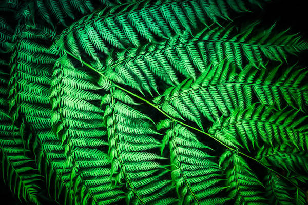 Photograph - Fernilicious    Go2 by Ray Warren