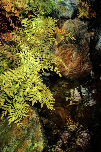 Photograph - Ferns Along The Brook 6318 Dp_2 by Steven Ward