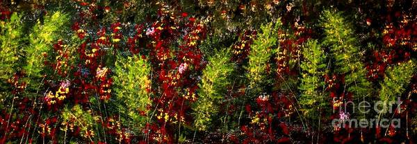 Wall Art - Painting - Ferns And Berries by Tim Townsend