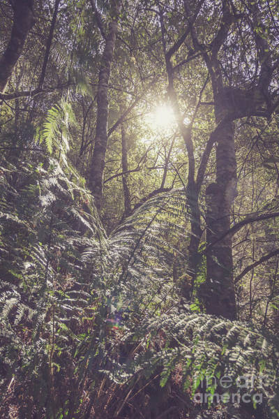 Canopy Photograph - Ferns And Sunshine by Jorgo Photography - Wall Art Gallery