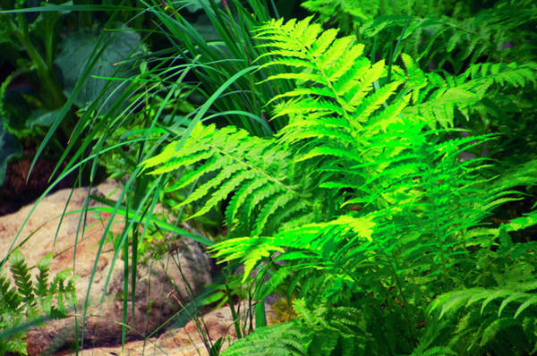 Photograph - Ferns by Bill Cannon