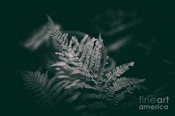 Photograph - Ferns by Clayton Bastiani