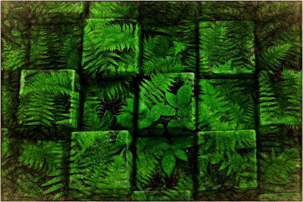 Photograph - Ferns, Cubed by Phyllis Meinke