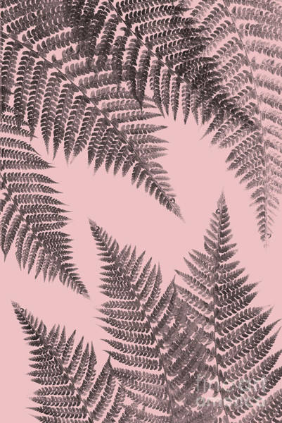 Ferns On Blush Art Print