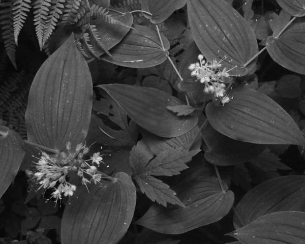 Photograph - Ferns With Flowers by Charles Lucas