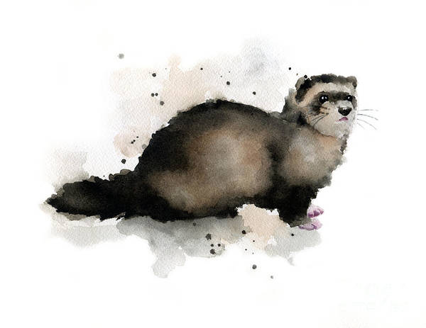 Ferrets Wall Art - Painting - Ferret by David Rogers