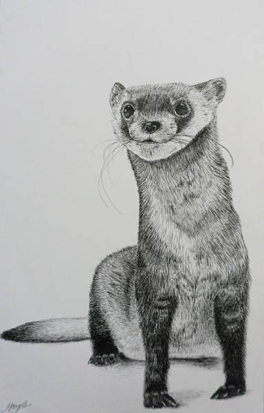 Ferrets Drawing - Ferret by Gary Bautista
