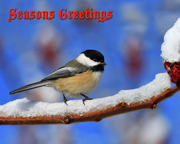 Wall Art - Photograph - Festive Chickadee by Tony Beck