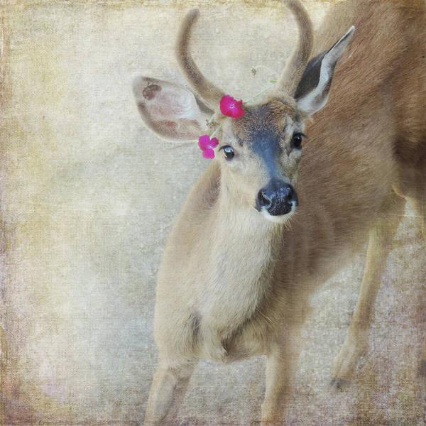 Photograph - Festive Deer by Sally Banfill