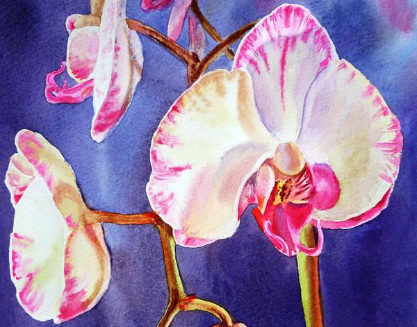Dye Painting - Festive Orchid Pink And White by Irina Sztukowski
