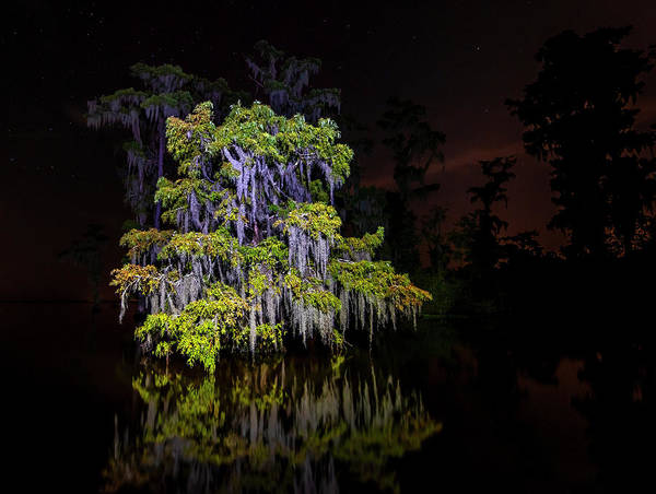 Photograph - Festooned Cypress Tree by Andy Crawford