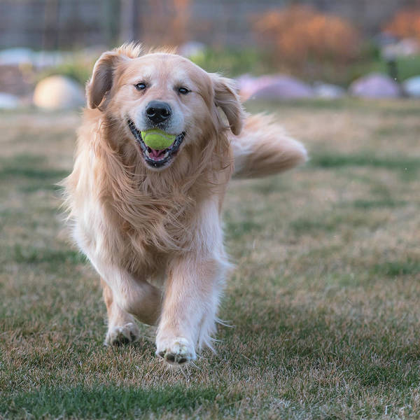Photograph - Fetch by Jennifer Grossnickle