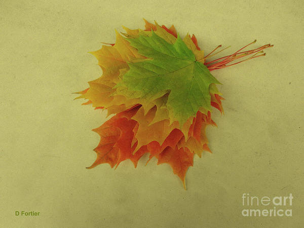Wall Art - Photograph - Feuilles D'automne I / Fall Leaves I by Dominique Fortier