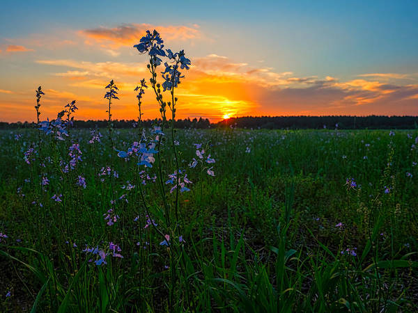 Photograph - Field And Flower Sunset by Brad Boland