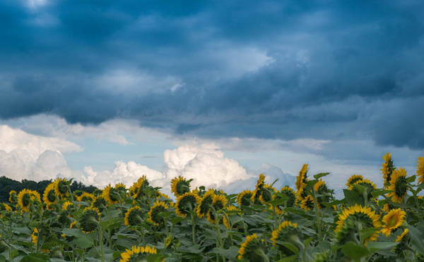 Photograph - Field And Sky by Joye Ardyn Durham