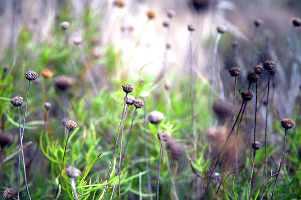 Photograph - Field Flowers by David Chasey