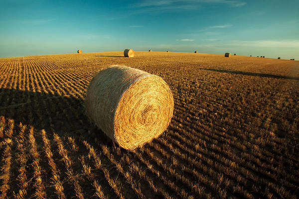 Photograph - Field Full Of Bales by Todd Klassy
