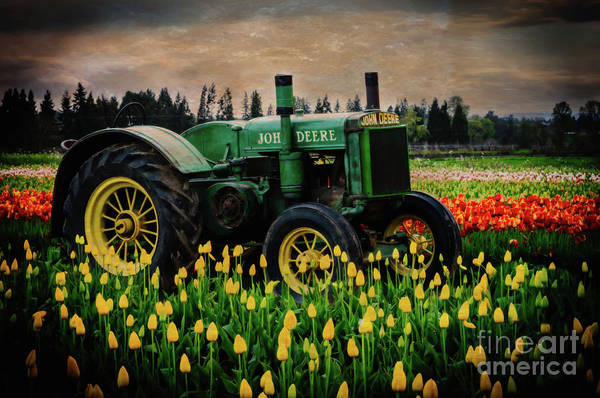 Photograph - Field Master by Sal Ahmed